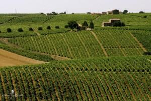 Vineyard3 - 25-06-2005 (2,5)